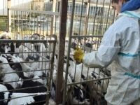 Fransa alarma geçti: Tüm kanatlı hayvanlar yasaklandı