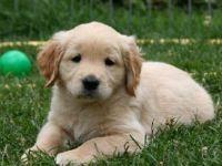 Köpeği olanların ölüm riski yüzde 36 daha az