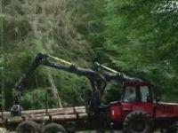 Ağaç keserse günde 100 bin avro ödeyecek