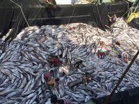 Avrupa Konseyi balık avlama kotası getirdi