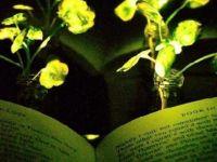 Işık saçan bitki yapıldı