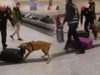 Hollanda'daki köpekli aramaya karşılık verildi