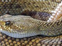 Klozete oturan kadını yılan ısırdı