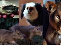 Gurbetçi hayvanlar İzmir'de misafirlerini bekliyor