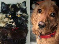Kedi ve köpek satışı yasaklanıyor