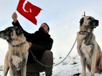 'Neden Sivas'tan İtalya'ya Kangal getirmiyoruz?'