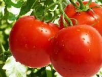 17 ton Türk domatesini ülkeye almadı