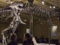 Dünyanın en büyük ve yaşlı fosili bulundu