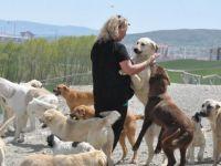 Gurbetçiden memleketine köpek barınağı