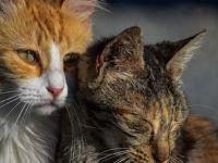 Sokak kedileri için nüfus sayımı