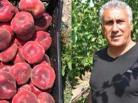 Gurbetçi memleketinde 60 ton meyve üretiyor