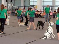 Almanya'da 4 bin köpek güzellikte yarıştı