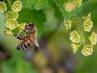 AP'den arıları koruma adımı