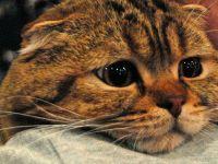 5 yaşındaki bir kedide korona çıktı
