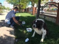 Adıyaman Belediyesi sokak hayvanlarını unutmuyor