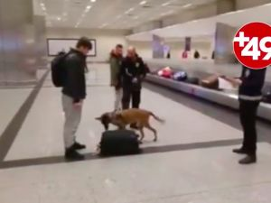 Hollandalı turistlere köpekli arama