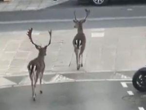 Paris sokakları geyiklere kaldı